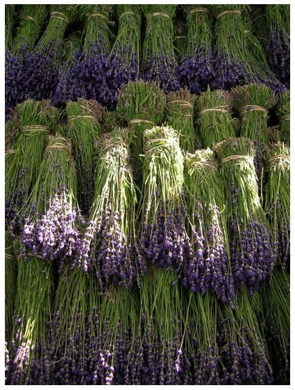 Add a touch of lovely lavender ♥